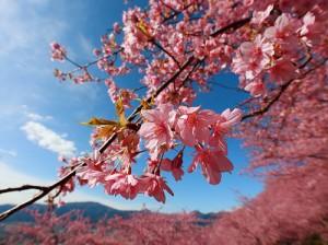 サクラ咲く頃キズナ再び!武豊とキズナの回顧録【ゲスト投稿】