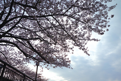 武豊とキズナに春を感じた【京都記念の観戦記】