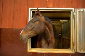 武豊によく騎乗依頼がくる角田晃一厩舎など【2歳馬一覧】