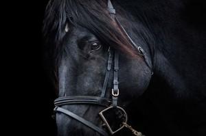 武豊騎乗予定馬の想定【9月27日28日分の確定版】